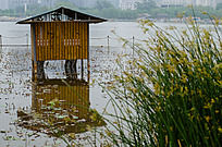 莲花池水面上的小竹房实际上是一个广播喇叭