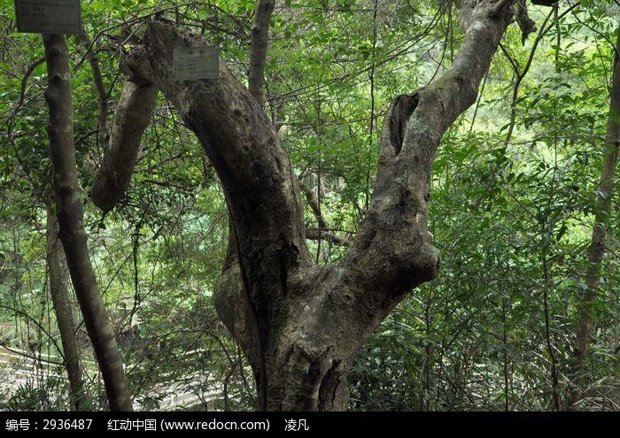 原创摄影图 动物植物 树木枝叶 杨梅树  请您分享: 红动网提供树木