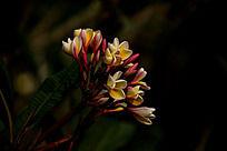 以深色为背景的花卉
