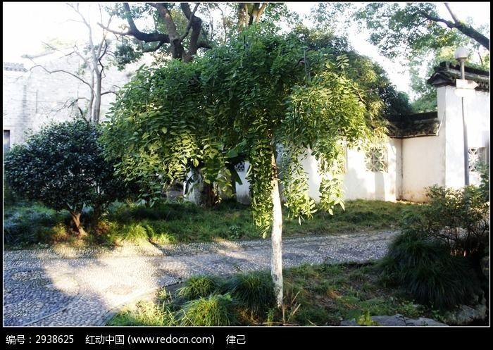 原创摄影图 动物植物 树木枝叶 公园里的绿化小树  请您分享: 红动网