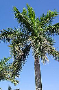 海边的棕榈树