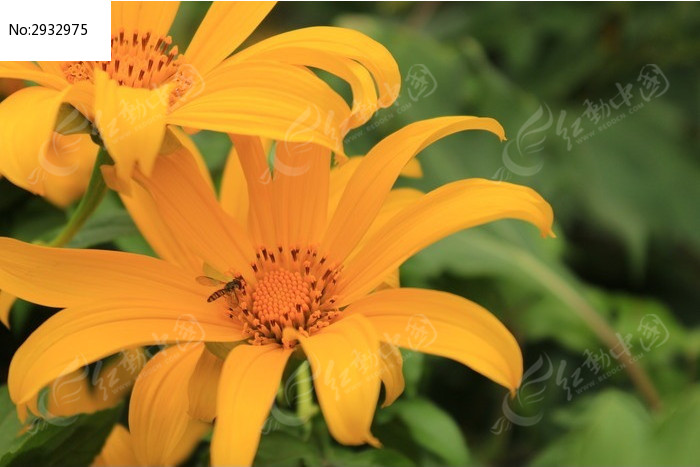 植物采蜜动物_蜜蜂图片蟒蛇图片吃人游戏全部图片