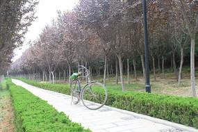 停在小道上的老式自行车