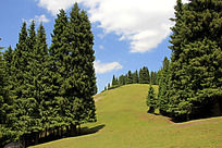 草原森林蓝天白云风景