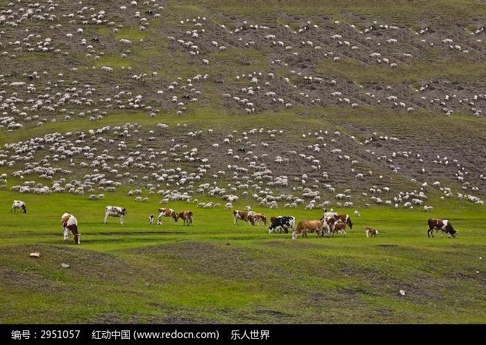 草原上的马群和 羊群 图片