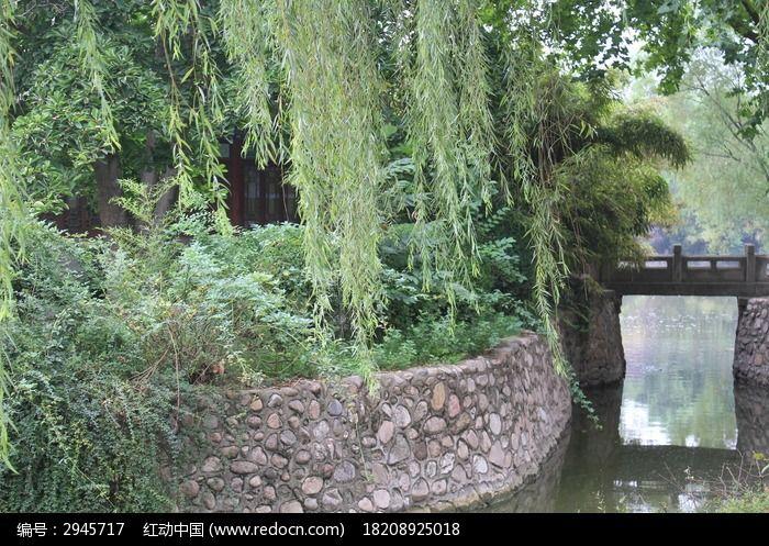 河岸的柳条图片_动物植物图片