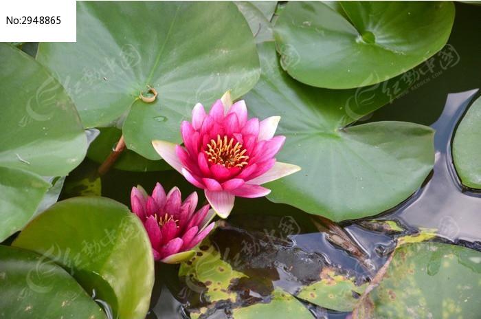 水莲折纸花步骤