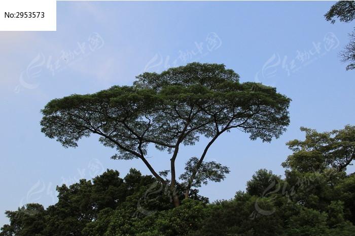 树木图片_图片_红动手机版