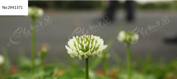 桠溪茶田边的花图片