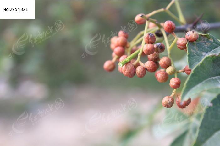 原创摄影图 动物植物 花卉花草 野生果实