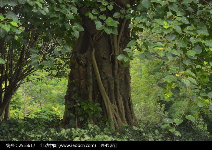 绿色茂盛的树木树叶图片