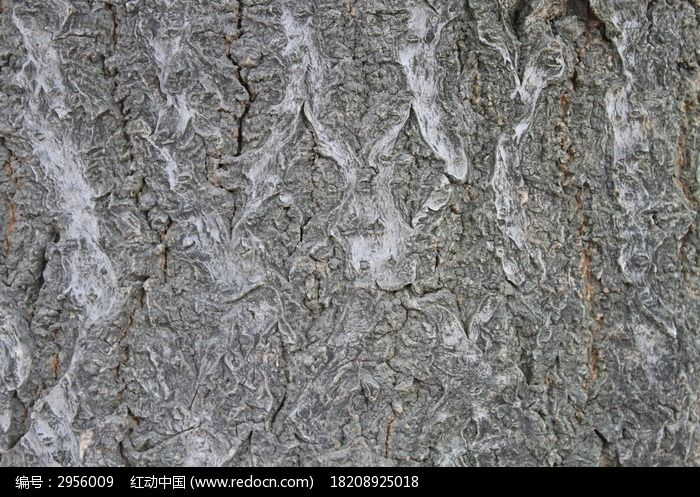 树皮材质贴图