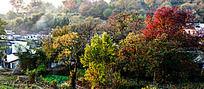 塔川田园景色