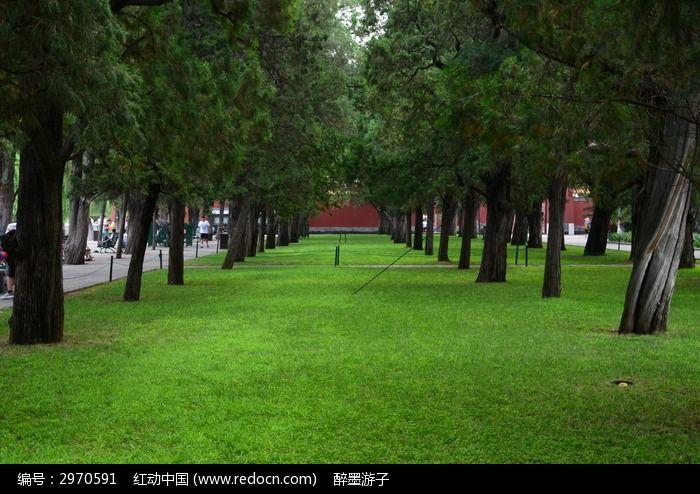 动物植物 树木枝叶