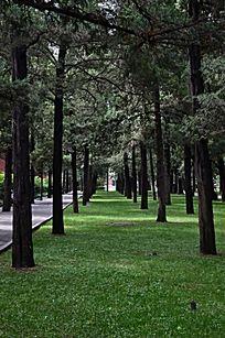 草地上排列整齐的大树