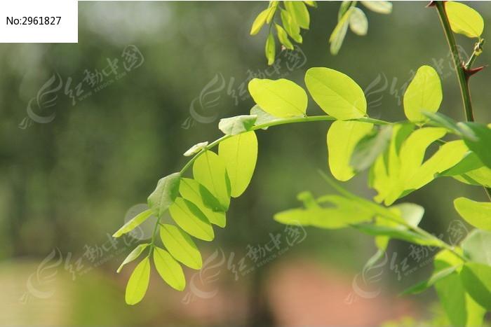 树叶光影图片,高清大图_树木枝叶素材
