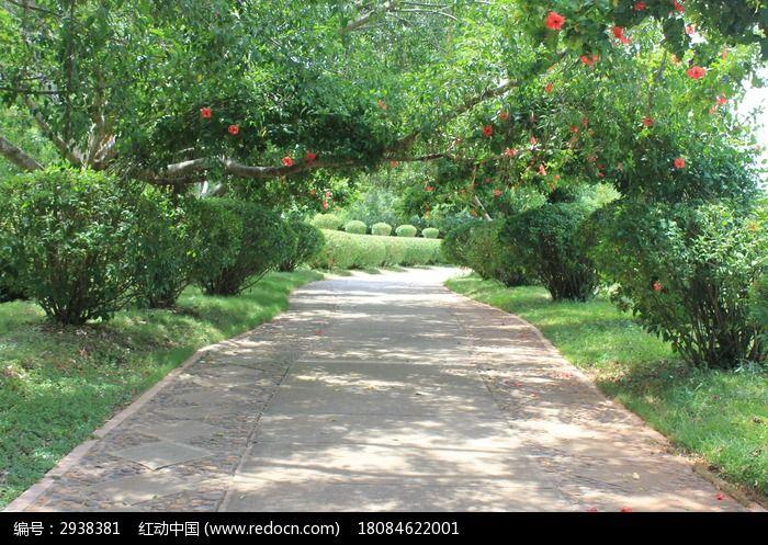 树荫交错小道图片,高清大图_自然风景素材