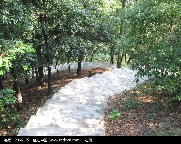 台阶两旁的树木图片_图片_红动手机版
