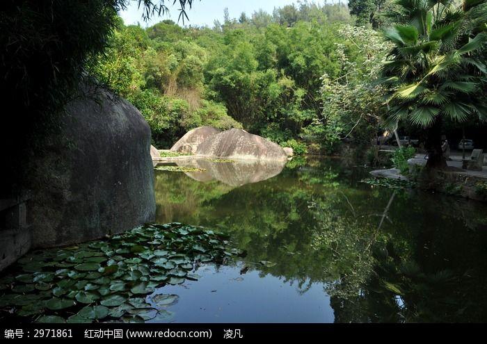 万石植物园飘着荷叶的小池