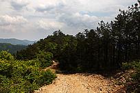 五溪山的植被