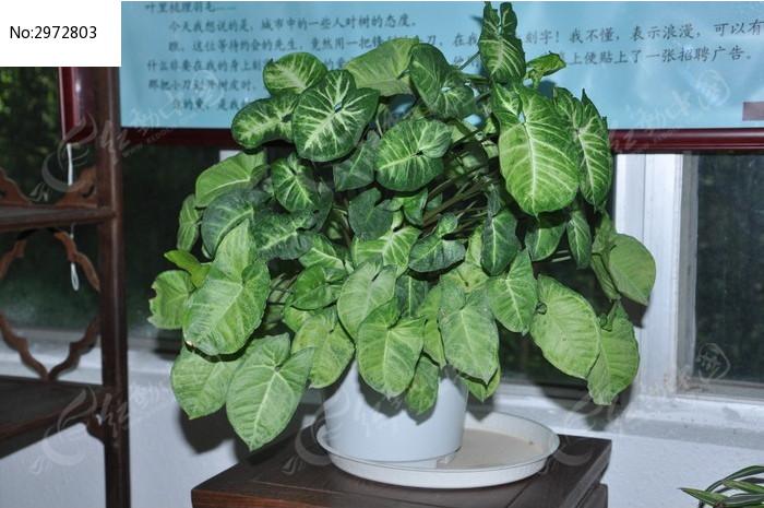 窗边的绿色盆栽植物