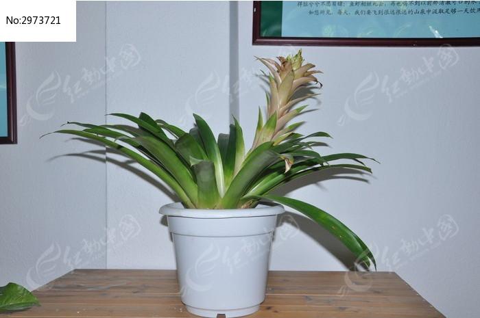 墙角的一盆绿色盆栽植物图片