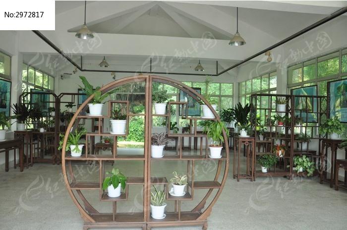 原创摄影图 动物植物 花卉花草 室内的摆放的盆栽植物