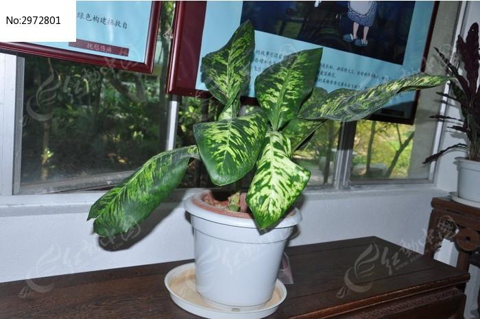 室内盆栽植物图片,高清大图