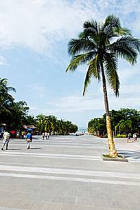 子树海南椰子树图片_椰子树海南椰子树工作素机械设计与自动化设计图片