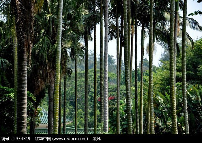 一排椰子树图片素材下载(编号:2974819)
