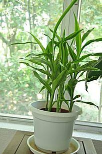 一盆盆栽植物