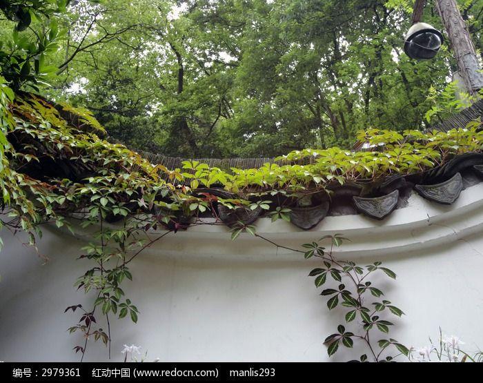 长满藤蔓的树林中的复古白色外墙建筑图片
