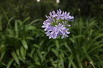 淡蓝色一簇小花