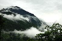 高山森林云雾缭绕