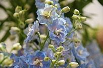 水蓝色花朵