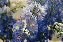 水蓝色花朵一束