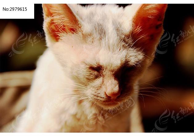 猫咪可爱的眼睛