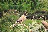 枝头上的漂亮小鸟标本