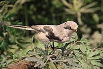 枝头上的一只鸟标本