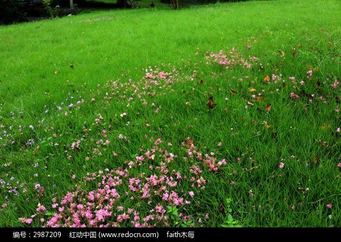 原创摄影图 动物植物 花卉花草 绿草地  请您分享: 素材描述:红动网提