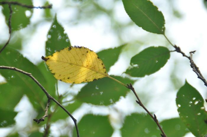 原创摄影图 动物植物 树木枝叶 秋天叶黄  请您分享: 红动网提供树木