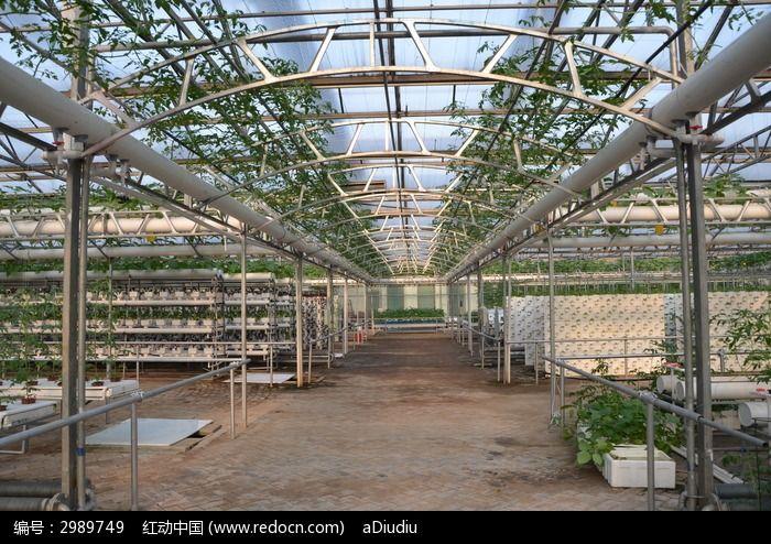 寿光蔬菜大棚图片_寿光蔬菜大棚里的支架高清图片下载_红动网