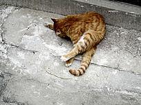 道观前的一只小猫