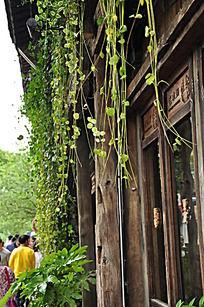 古老的木屋和藤条