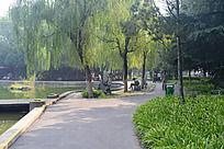 焦作雕塑公园的小路和柳树