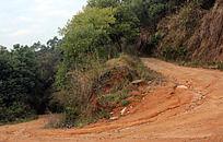 林中土黄色的山路
