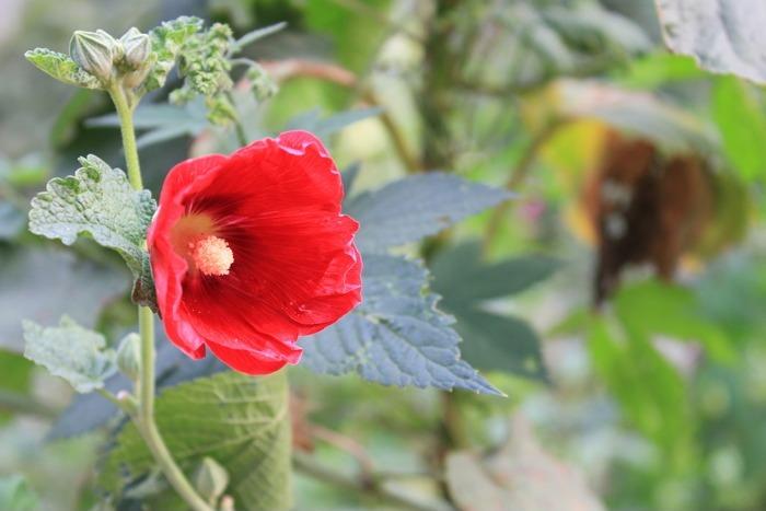 原创摄影图 动物植物 花卉花草 鲜艳的红花  请您分享: 红动网提供