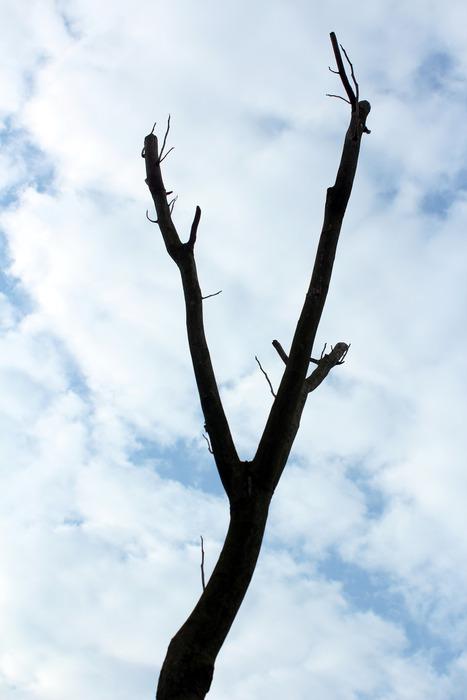 枝指向天空图片