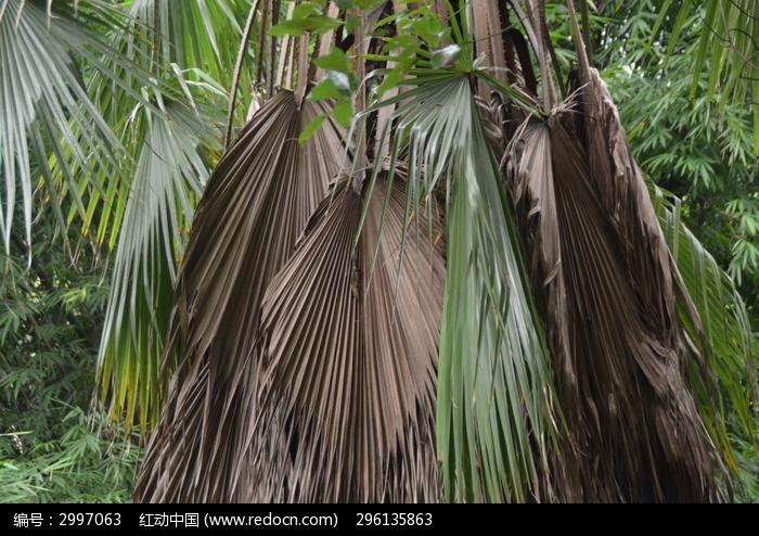 棕树叶子编织凤凰图解