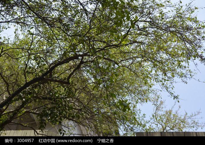 原创摄影图 动物植物 树木枝叶 树下摄影枝叶  请您分享: 红动网提供